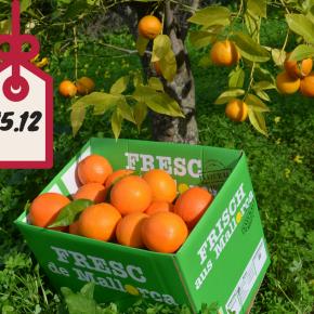 15.12. 10kg naturbelassene Orangen imAdventskalender